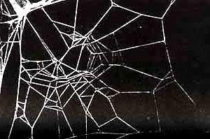 Efeito da cafeína nas aranhas surpreende cientistas