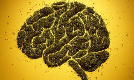 Maconha: versão mais potente está associada a psicose