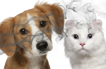 Saúde animal: mais um incentivo para parar de fumar
