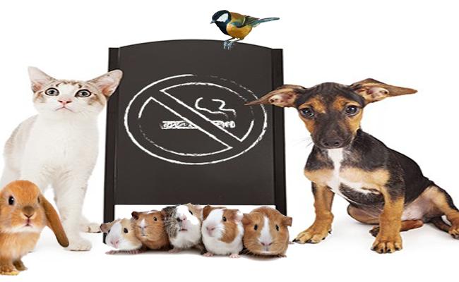 Fumo passivo também prejudica os animais